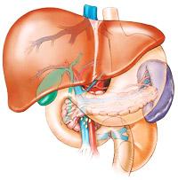 cibi salutari per il fegato